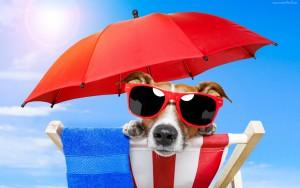 178685_pies_plaza_parasol_okulary (2)